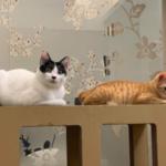 個案分享:Bibi與Tigger 貓間衝突