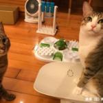 個案分享:摸摸與茶茶 新舊貓介紹