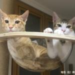 個案分享:地瓜與馬鈴薯 遊戲性攻擊 新舊貓介紹