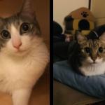 飼主分享:新來的幼貓給舊貓帶來壓力