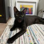 飼主分享:貓咪咬人問題、與新貓之間的關係調整