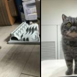 飼主分享:新手貓奴如何面對永遠不會累的幼貓