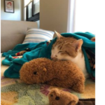 飼主分享:podcast很好聽、貓對貓談社賣的玩具很捧場