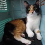 飼主分享:極度恐懼外出的貓咪的調整