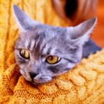 人貓共感:飼主因疫情嚴峻而焦慮時,貓咪可能會受到影響