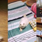 飼主分享:17歲老貓醫療減壓