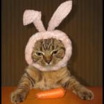 為什麼貓咪不適合吃素