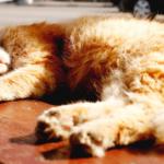 夏季主題:貓不想吹冷氣?/ 外出中暑/ 喝水與吃飯/ 登革熱噴藥