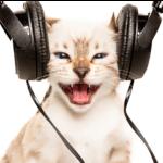 感官與食物類的環境豐富化:貓電視、貓音樂、人類食物