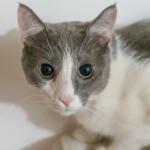 人類對貓咪表情的三大誤解