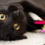 逗貓棒與貓玩具的幾個小眉角