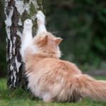 貓抓板與磨爪的知識,還有抓沙發的解法