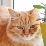 貓咪如果是一種植物,就是天天澆水會死的那一種 - 淺談貓咪照顧