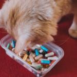 貓咪情緒保健品推薦 (聲明:非業配)