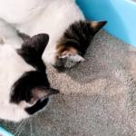 貓砂盆與貓砂相關的常見疑問