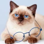 關於貓咪這種動物:感官、溝通方式、「貓很陰?」