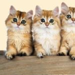幼貓換牙期一直咬怎麼辦/ 幼貓可以玩逗貓棒嗎?