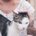人跟貓的適配度確認/ 新手領養如何選貓