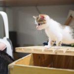 幼幼貓文章集結:小毛咪看世界