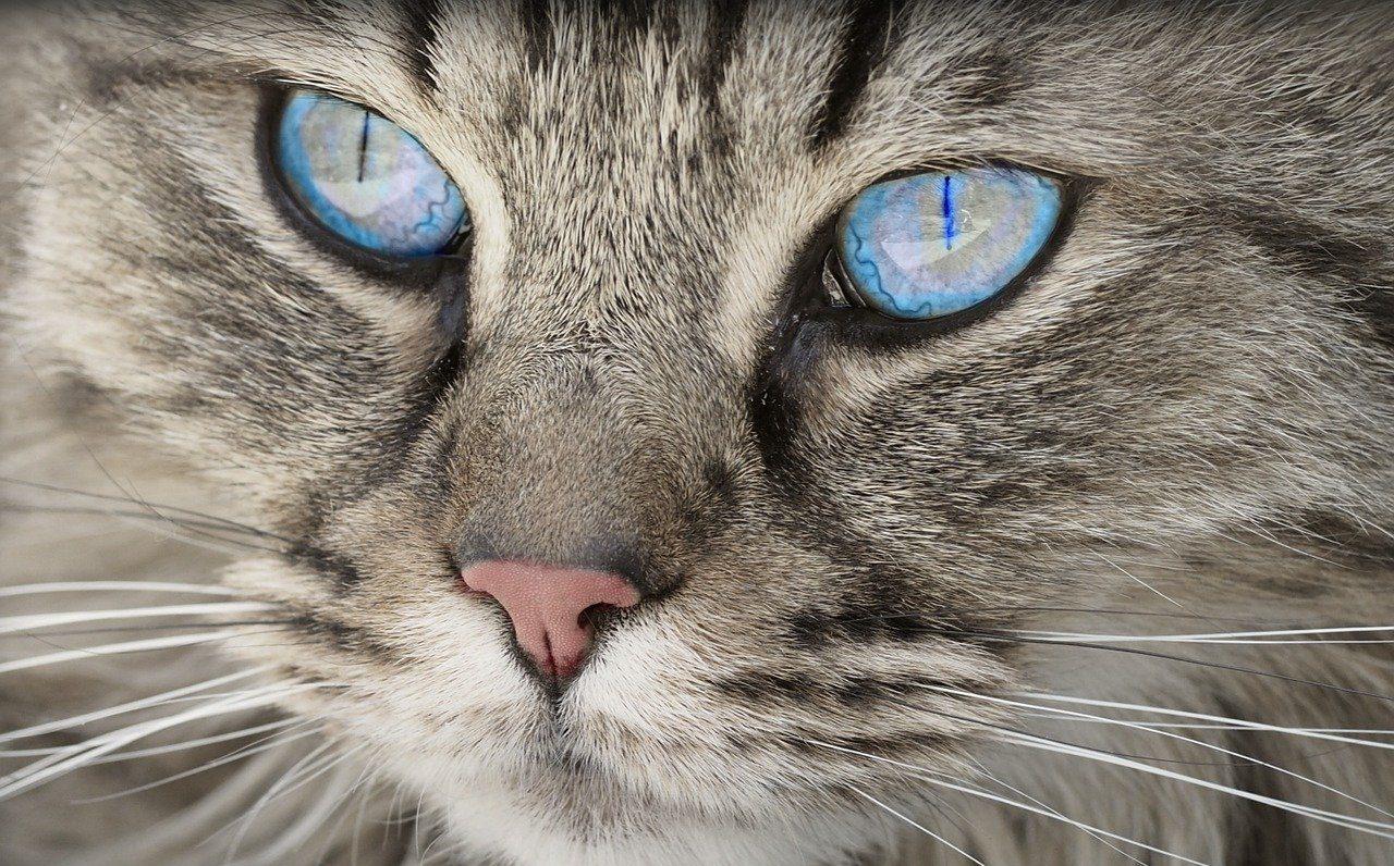 cat, animal, cat portrait