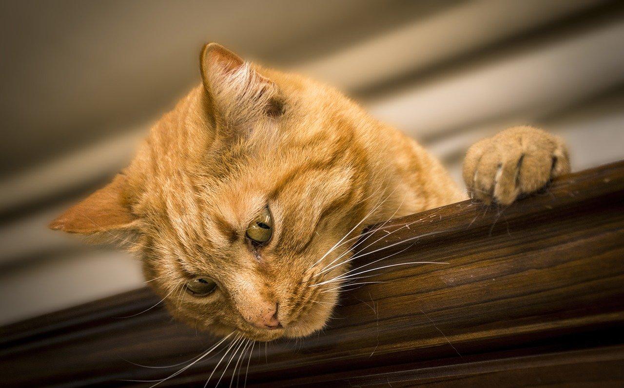 cat, feline, animal