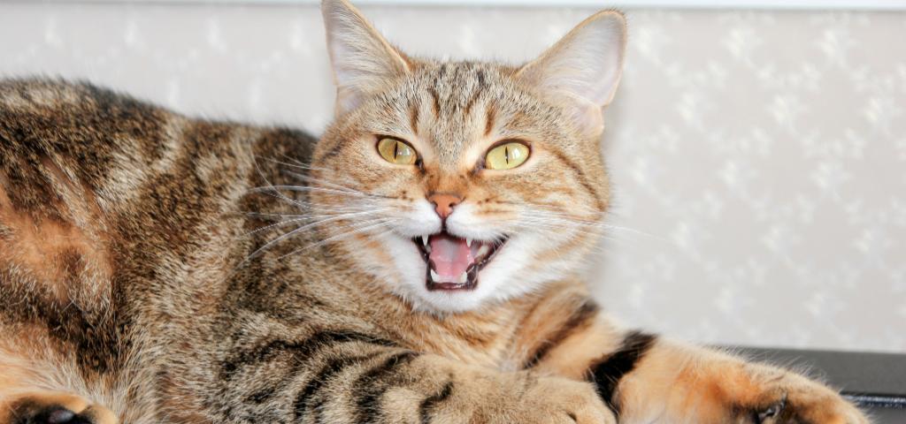 貓談社的臉書社團 (13)