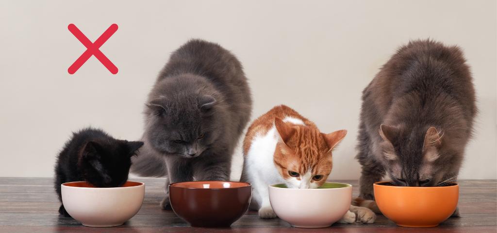 貓談社的臉書社團 (17)