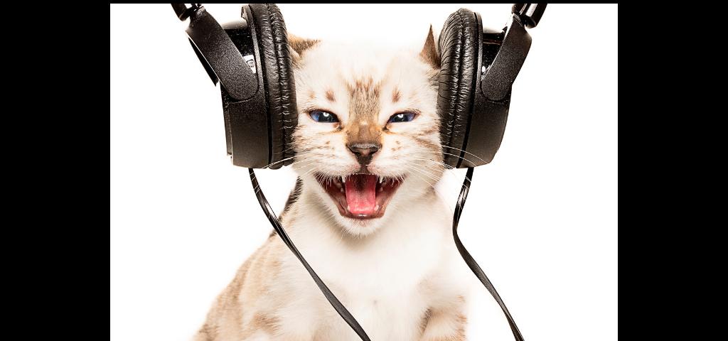 貓談社的臉書社團 (18)