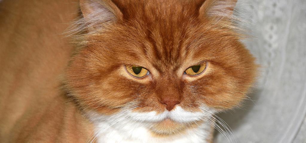 貓談社的臉書社團 (23)