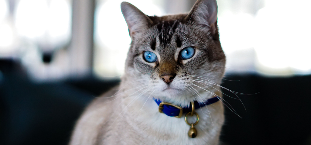貓談社的臉書社團 (32)