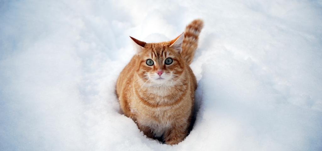 貓談社的臉書社團 (7)