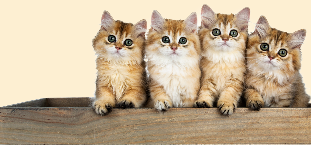 貓談社的臉書社團 (8)
