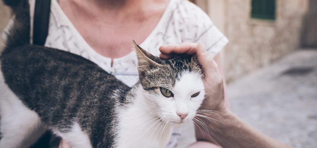 貓談社的臉書社團 (9)