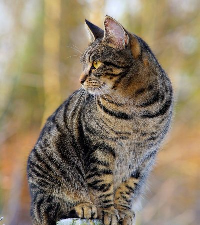 cat, female, fur